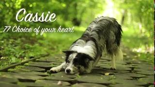 border collie Cassie ~1 year old~ tricks & frisbee