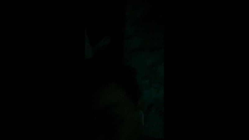 Паша Эпик (LAN Пирот) — Live
