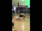 Студия Фитнеса и Йоги