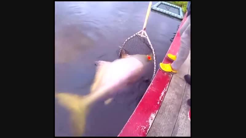 крупный улов