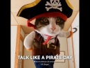 Talk Like a Pirate Day! ⚓💣
