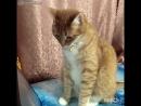 Кот шокирован зловещими звуками