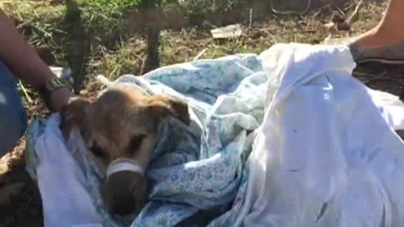 Фиолент собака два перелома 17 09 18