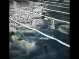 Норильский плавательный бассейн 70-е г фрагмент фильма 69-я параллель