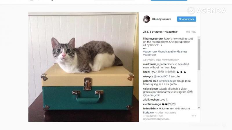 Двулапая кошка Ру стала звездой интернета....