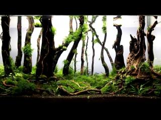 Aquascape_Nature_Aquarium_Aquascaping_Forest_Day_115.mp4