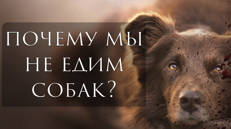 Почему есть собак - варварство?