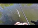 [Клуб рыбаков. Рыбалка. Club fishermen.] С поплавчанкой за карпом и боковой кивок в помощь ему! Зачетная рыбалка вышла!