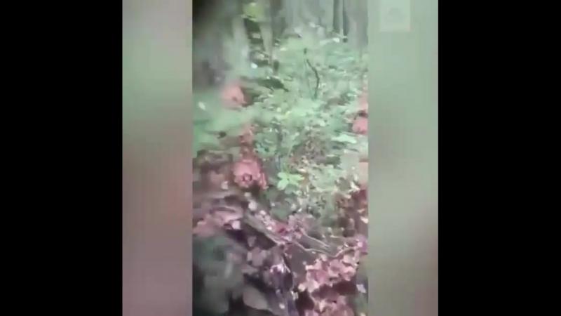 Грибник пришел в лес и потерял дар речи.