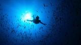 Guillaume NERY Portofino. Freediving