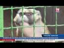 Новый обитатель симферопольского зооуголка дикообраз Чупа и улучшенные условия для хищных птиц в Детском парке продолжает разви