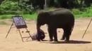 Слоненок рисует себя Ё! Эволюция самосознания