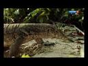 3 Дикая природа островов Индонезии Док фильм Нидерланды 3 я серия 29 09 2018