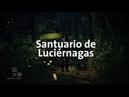Mexico I Santuario de Luciérnagas en el estado de Tlaxcala Mexico