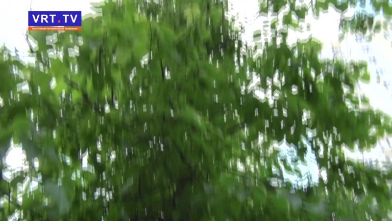 Пилить, нельзя помиловать! Кто принял решение о срубе деревьев вдоль улиц Жулябина и Пушкина?