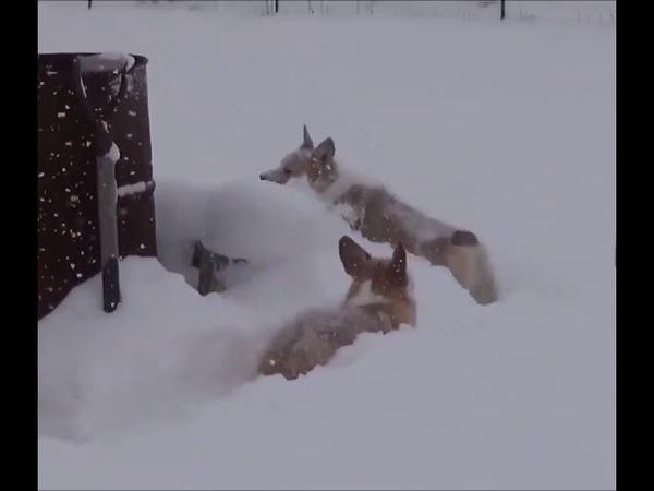Очаровательные собаки которые очень любят снег