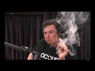 Илон Маск курит траву в прямом эфире