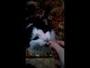 кот и огурец