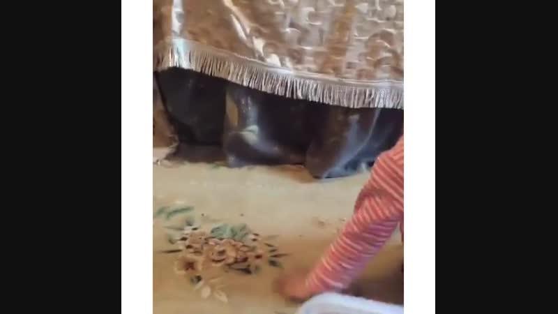 Қалаулым Жобасы Дүйсенбі мен Жұма аралығында Евразия арнасында сағат 12 00 ден 15 00 ге дейін болады Демалыс күндері барлық