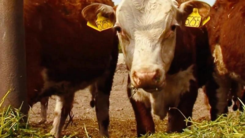 Национальная система учета и регистрации животных РЕГАГРО. Обзорный фильм » Freewka.com - Смотреть онлайн в хорощем качестве