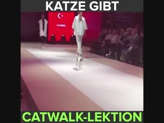 """Eine katze macht den models auf dem laufsteg deutlich, warum es überhaupt """"catwalk"""" heißt und wie man richtig zu stolzieren hat."""