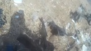 Syria War;Syrian Army Tank Was Attack Isis
