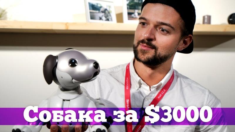 Aibo - что умеет робот-собака от Sony
