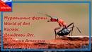 Купить муравьиную ферму World of Ant Купить муравьиную ферму Дождевой Лес Космос Пустыня Атакама
