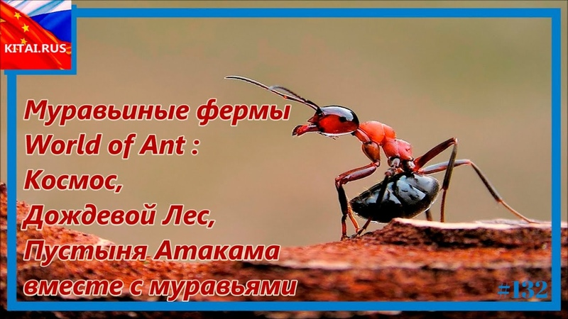Купить муравьиную ферму World of Ant Купить муравьиную ферму Дождевой Лес, Космос, Пустыня Атакама