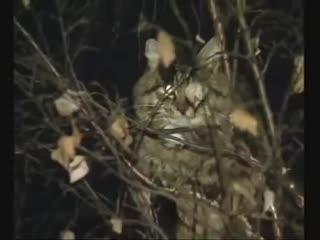 Русский солдат - спасатель котов