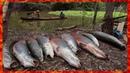 Ловля рыбы на суше в норах