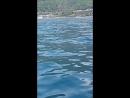 дельфины, папа нырнул и рыбки уплыли. Запах чачи не понравился