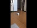 Когда очень хотел собаку