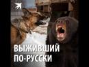 Выживший по-русски