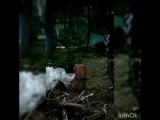 VID_52070203_162314_163.mp4