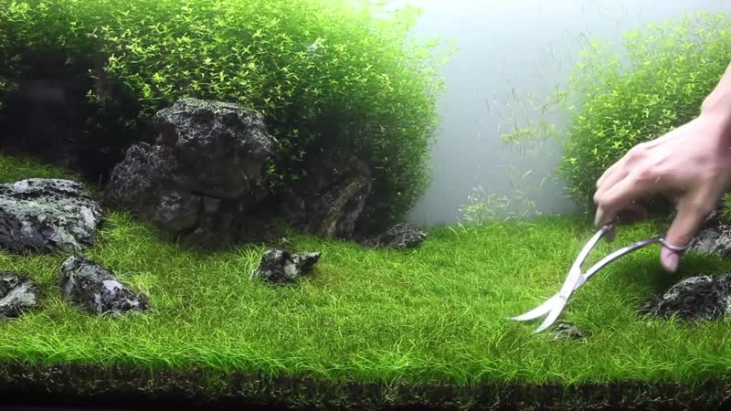 Pruning a Shrimp Tank