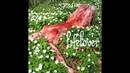 [Pulver] Lifelover - Vardagsnytt