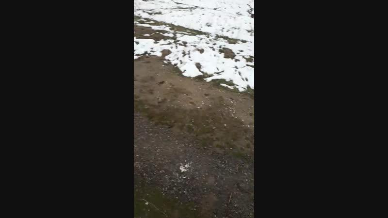 алапар vs тайсон 2 бой