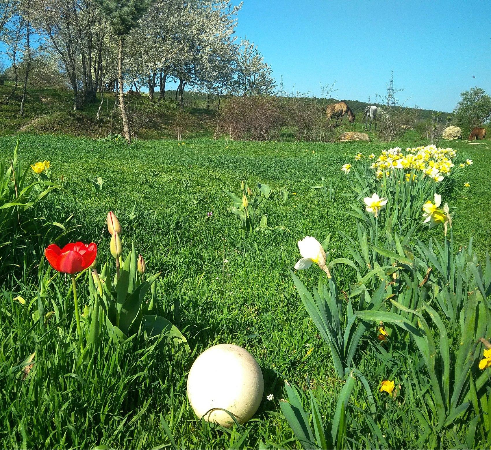 Весна, все цветет, пахнет и размножается