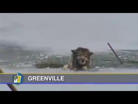 Cão preso no gelo em absoluto desespero é salvo pelos bombeiros