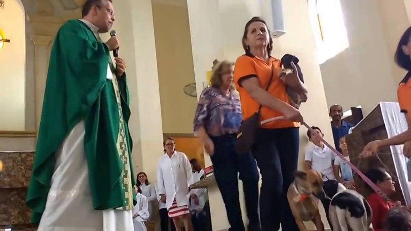 Pároco em GravatáPE recebe cães na missa para incentivar adoção. AcheiC