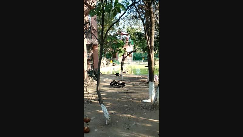 Павлины и фламинго в парке Пакистане.
