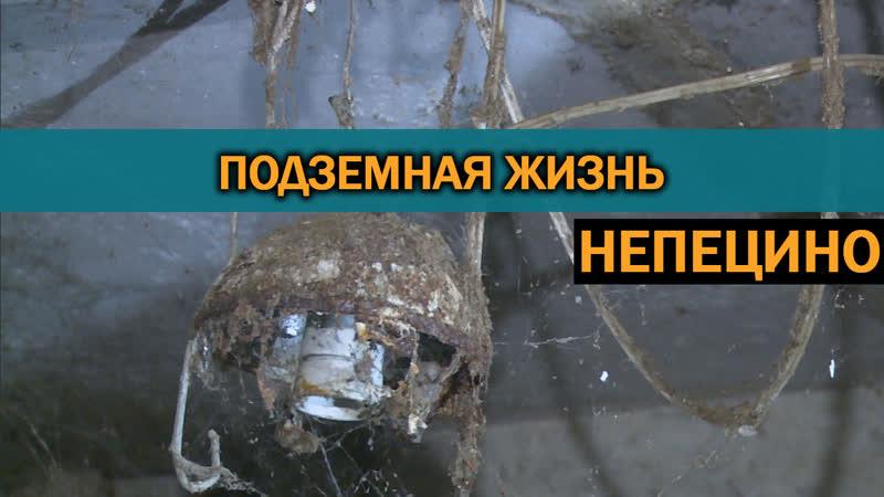 Управленцы из Коломны в упор не видят протечки, мусор и крыс в подвале дома