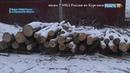 В Курганской области поймали банду «черных лесорубов»