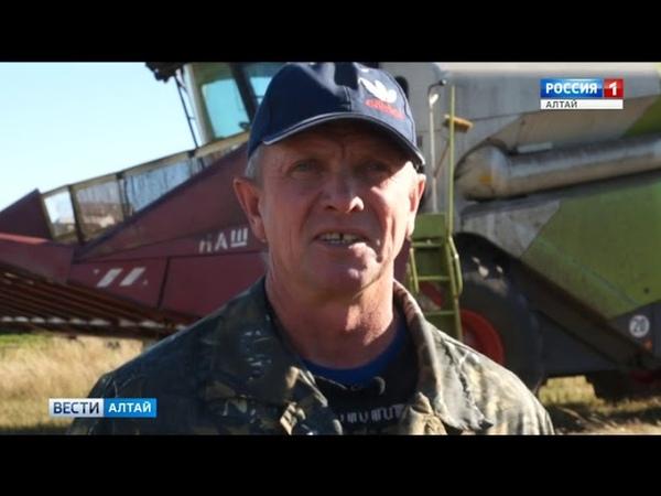 В этом аграрном сезоне в Алтайском крае делают ставку на семечки
