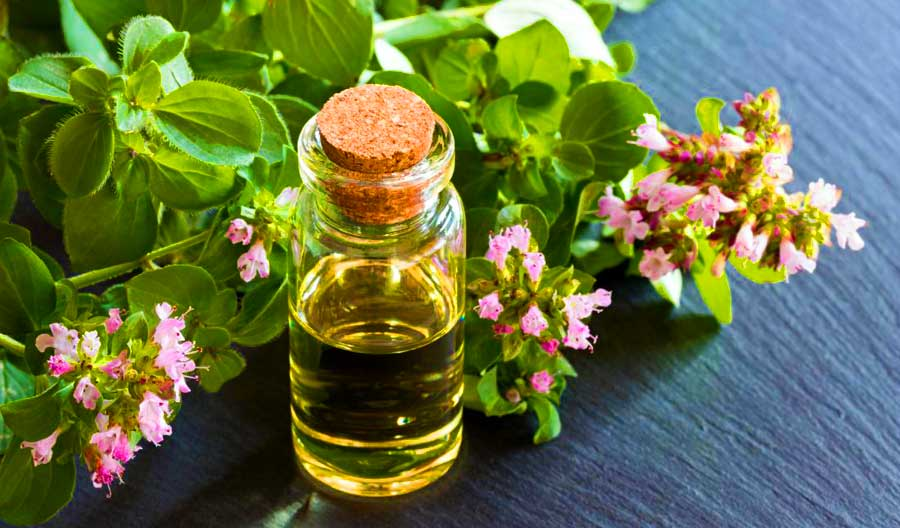 Почему эфирное масло Орегано противостоит онкологии