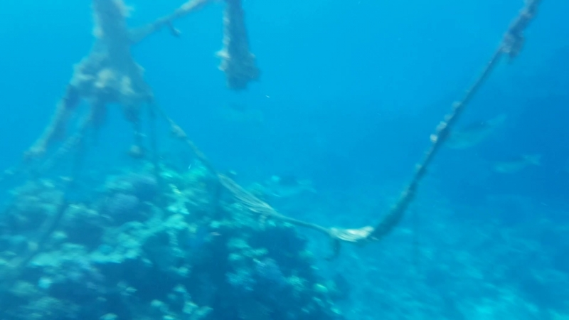 Подводное плаванье)