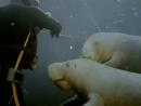 El mundo submarino de Jacques Cousteau - Ep 18 Las ultimas sirenas