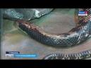 Незваные гостьи. Ставрополье наводнили змеи