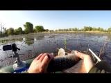 Рыбалка на ОГРОМНОГО КАРАСЯ! который крутит удочку в бублик